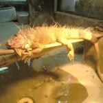 神戸市立王子動物園に行ってきました