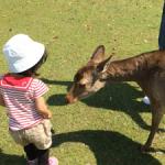 奈良公園で鹿に餌をあげてきました